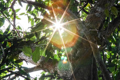 Beautiful solar ray. In the garden Stock Images