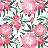 Beautiful sophisticated cute lovely tender herbal floral composition of a pink peonies with green leaves and red buds pattern. Watercolor hand illustration Stock Photo
