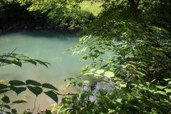 Beautiful source of ljubljanica in vrhnika, slovenia. In summertime stock images