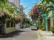 Beautiful south street with trees flowers and palm trees in the summer. royalty free stock photo