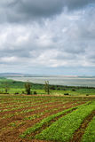 Beautiful southern landscape with field and clouds Stock Image