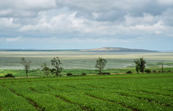 Beautiful southern landscape with field and clouds. Agriculture, field, harvest, weather royalty free stock image