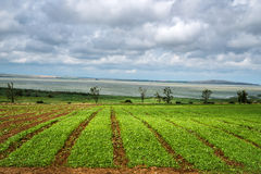 Beautiful southern landscape with field and clouds. Agriculture, field, harvest, weather Royalty Free Stock Photo