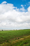 Beautiful southern landscape with field and clouds Stock Photo