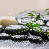 Beautiful spa έννοια του πράσινου κλαδίσκου passionflower με το tendril, Στοκ Εικόνα