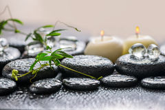 Beautiful spa έννοια του πράσινου κλαδίσκου passionflower με το tendril, Στοκ φωτογραφίες με δικαίωμα ελεύθερης χρήσης