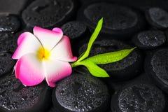 Beautiful spa έννοια του πράσινου μπαμπού κλάδων, WI λουλουδιών plumeria Στοκ φωτογραφία με δικαίωμα ελεύθερης χρήσης