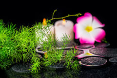 Beautiful spa έννοια του πράσινου σπαραγγιού κλάδων με τις πτώσεις, δαμάσκηνο Στοκ εικόνα με δικαίωμα ελεύθερης χρήσης