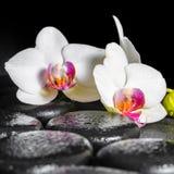 Beautiful spa ακόμα ζωή του ανθίζοντας άσπρου και κόκκινου λουλουδιού ορχιδεών Στοκ εικόνες με δικαίωμα ελεύθερης χρήσης