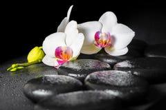 Beautiful spa ακόμα ζωή του ανθίζοντας άσπρου και κόκκινου λουλουδιού ορχιδεών Στοκ φωτογραφίες με δικαίωμα ελεύθερης χρήσης