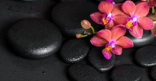 Beautiful spa ακόμα ζωή του ανθίζοντας λουλουδιού ορχιδεών κλαδίσκων κόκκινου, pha Στοκ εικόνες με δικαίωμα ελεύθερης χρήσης