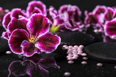 Beautiful spa background of geranium flower, beads and black zen Stock Photos