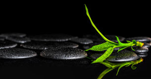 Beautiful spa background of green branch bamboo on zen basalt st. Ones with dew, closeup stock photos