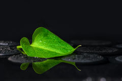 Beautiful spa background of green leaf Calla lily on zen basalt Stock Image