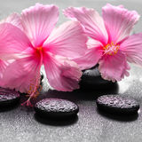 Beautiful spa background of pink hibiscus flowers on zen basalt Stock Photography