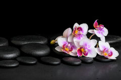 Beautiful spa background of purple orchid phalaenopsis on black. Zen stones with drops Stock Image