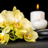 Beautiful spa background of yellow orchid phalaenopsis and candl Royalty Free Stock Photography