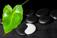 Beautiful spa background of Yin-Yang stone texture, green leaf w Stock Photos