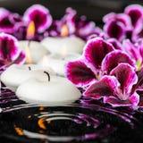 Beautiful spa composition of blooming dark purple geranium flowe Royalty Free Stock Photos