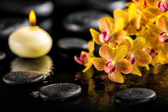 Beautiful spa composition of blooming twig orange orchid flower royalty free stock images