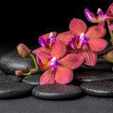 Beautiful spa composition of blooming twig red orchid flower, ph stock photos