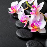 Beautiful spa composition of orchid phalaenopsis on black zen st Stock Photography