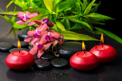 Beautiful spa composition of twig red orchid flower, phalaenopsis Stock Images