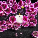 Beautiful spa concept of blooming dark purple geranium flower, b Stock Photo
