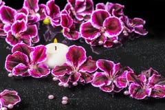 Beautiful spa concept of blooming dark purple geranium flower, b Stock Photography