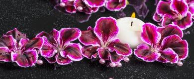 Beautiful spa concept of blooming dark purple geranium flower, b Royalty Free Stock Photography