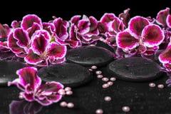 Beautiful spa concept of blooming dark purple geranium flower an Royalty Free Stock Photos