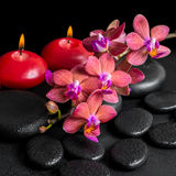 Beautiful spa concept of blooming twig red orchid flower, phalae Stock Image