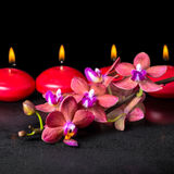 Beautiful spa concept of blooming twig red orchid flower, phalae Stock Images