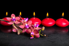 Beautiful spa concept of blooming twig red orchid flower, phalae Royalty Free Stock Photography
