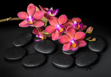 Beautiful spa concept of blooming twig red orchid flower, phalae Stock Photo