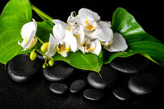 Beautiful spa concept of blooming white orchid flower, phalaenop Stock Image