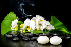 Beautiful spa concept of blooming white orchid flower; phalaenop Royalty Free Stock Photography