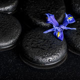 Beautiful spa concept of blossoming iris flower and black zen st Stock Photo