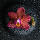 Beautiful spa concept  of dark purple orchid (phalaenopsis) Royalty Free Stock Images