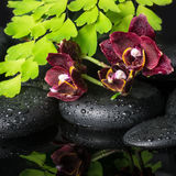 Beautiful spa concept of deep cherry orchid (phalaenopsis), gree Stock Photo