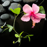 Beautiful spa concept  of delicate pink hibiscus, green tendril Stock Photo