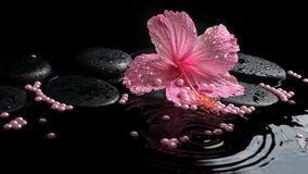 Beautiful spa concept of delicate pink hibiscus, zen stones Royalty Free Stock Image