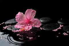 Beautiful spa concept of delicate pink hibiscus, zen stones Royalty Free Stock Photo