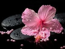 Beautiful spa concept of delicate pink hibiscus, zen stones Stock Image