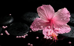 Beautiful spa concept of delicate pink hibiscus Royalty Free Stock Images