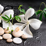 Beautiful spa concept of delicate white hibiscus, twig passionfl Royalty Free Stock Photo