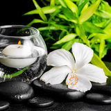 Beautiful spa concept of dew white hibiscus flower, bamboo  Stock Photography