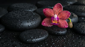Beautiful spa concept donkere purpere orchidee (phalaenopsis) Stock Fotografie