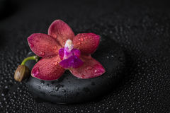 Beautiful spa concept donkerpaarse orchidee (phalaenopsis) Stock Fotografie