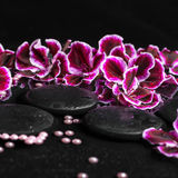 Beautiful spa concept of geranium flower, beads and black zen st Stock Images